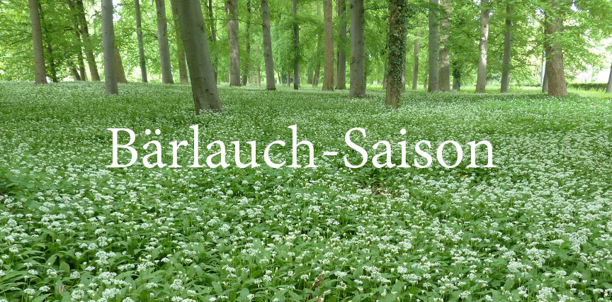 Bärlauch-Saison und Sammlung